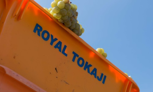 2017 Vintage & Vinification Royal Tokaji