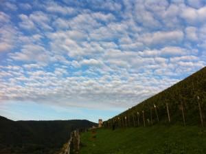 berg Schlossberg vineyard