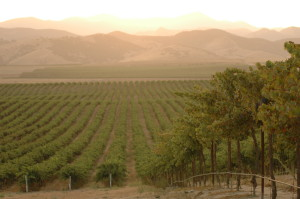 USA Wine Producer of the Year